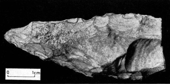 Pointe Moustérienne trouvée par Jean-Claude Le Goff dans l'Anse du Cornic...